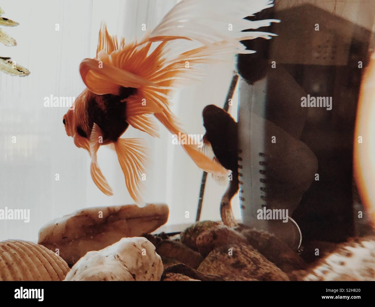 un pez Foto de stock