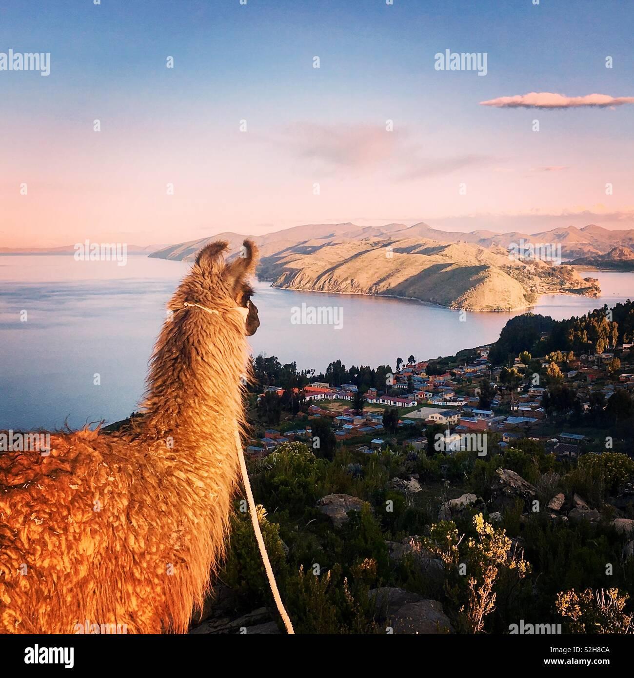 Llama a la Isla del Sol, con vistas al lago Titicaca, Bolivia Foto de stock
