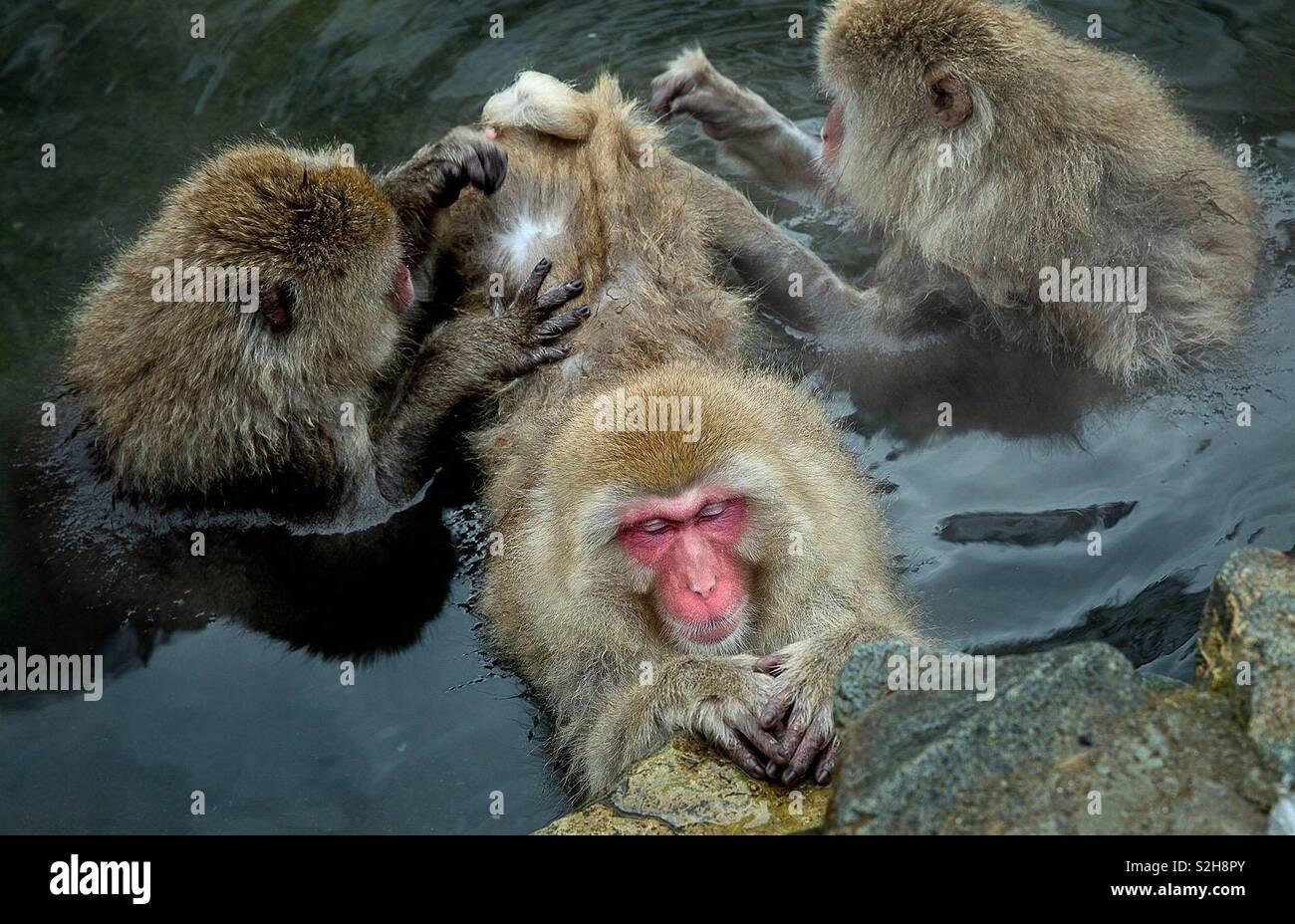 Visité El Parque De Monos De Nieve En El Parque Jigokudani Nagano En