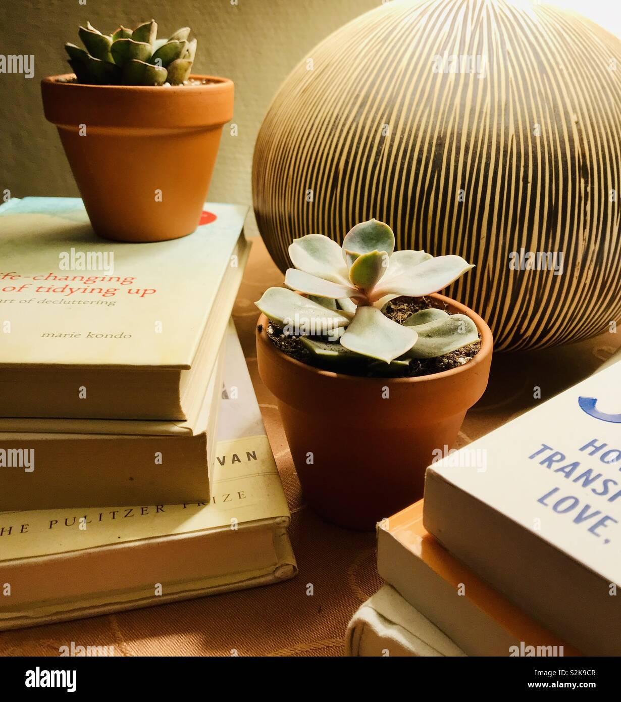 Libros apilados y plantas suculentas decoración con lámpara Foto de stock
