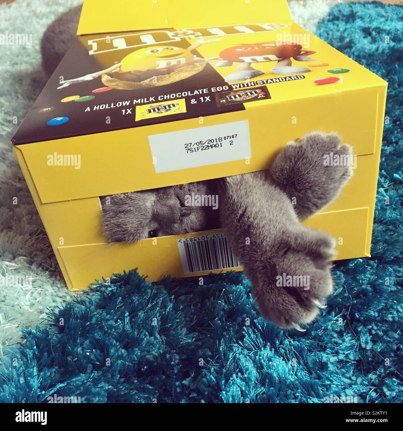 A alguien le encanta el cartón un poco demasiado! Foto de stock