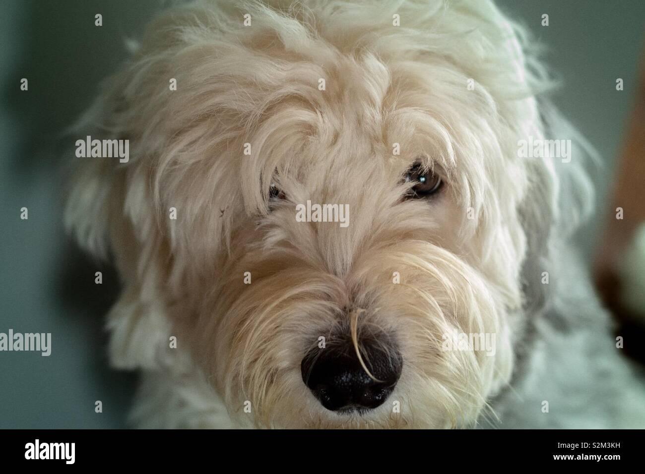 Jessy2 Foto de stock