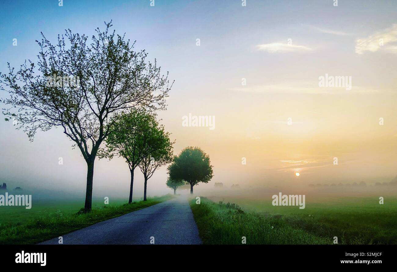 Amanecer temprano dando un resplandor dorado en la mañana húmeda sobre el fresco verde de los prados y el árbol cara country road Foto de stock