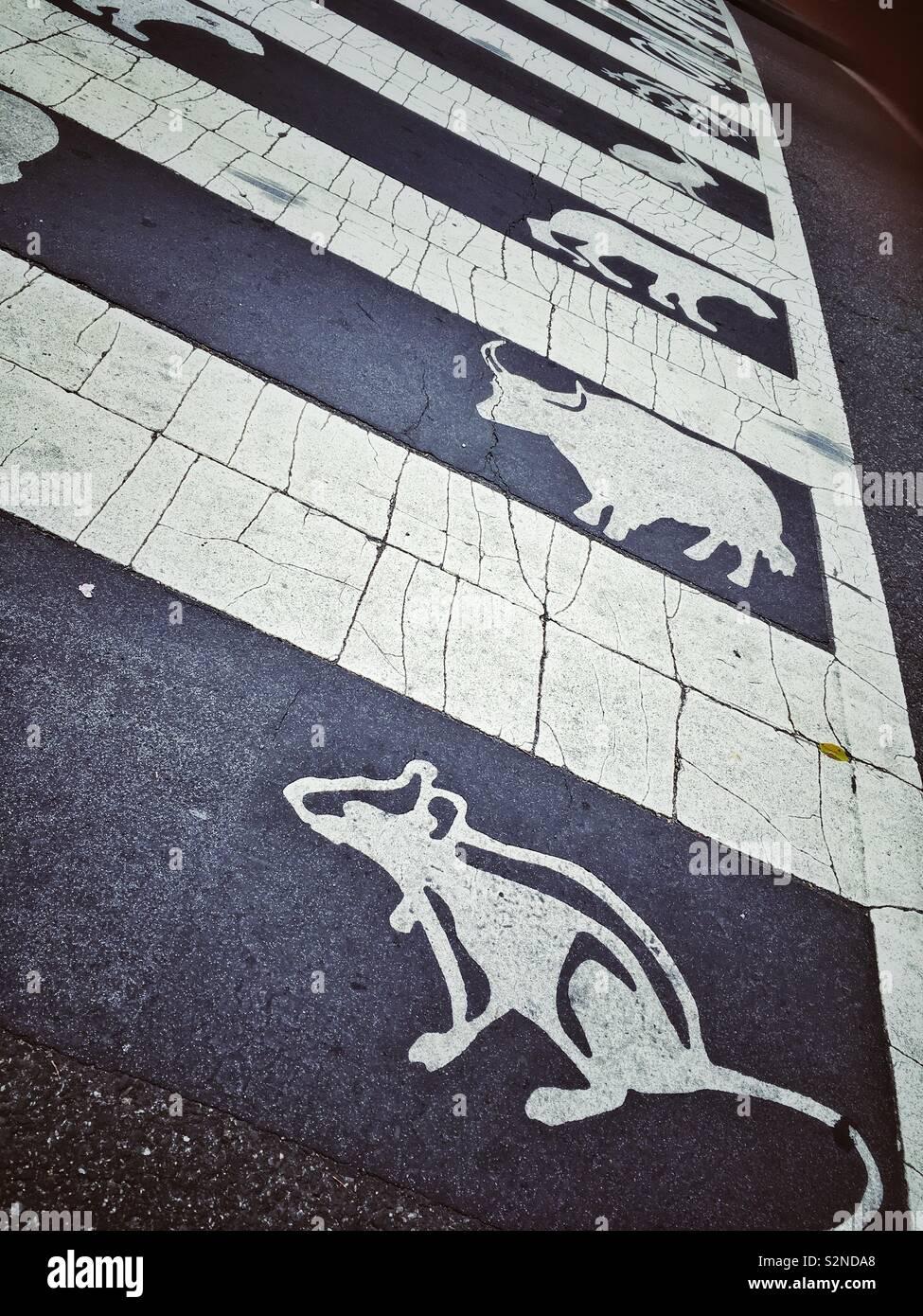 Paso de peatones con zodiacs animales en Chinatown, en Washington DC, EE.UU. Foto de stock