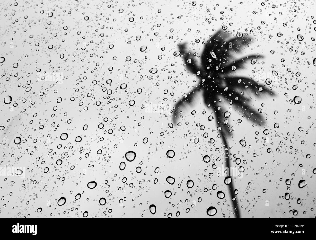 Tormenta del Caribe Foto de stock