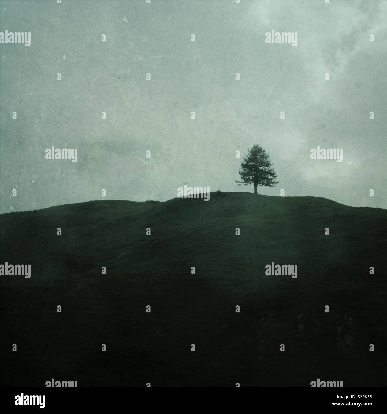 Un árbol solitario en una colina mínima en el paisaje verde - árbol minimalista Foto de stock