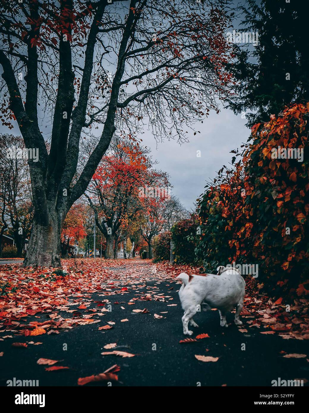 Perro de otoño Foto de stock