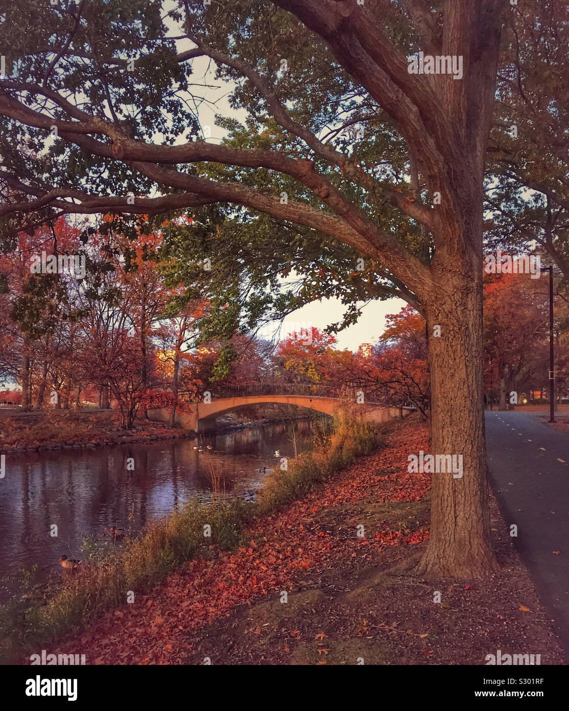 Escena de otoño en el Charles River Esplanade, Boston, Massachusetts. Foto de stock