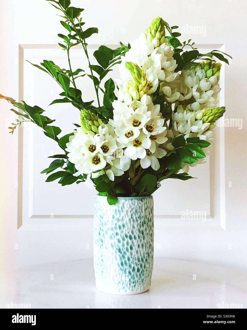 Delphiniums blanco Foto de stock