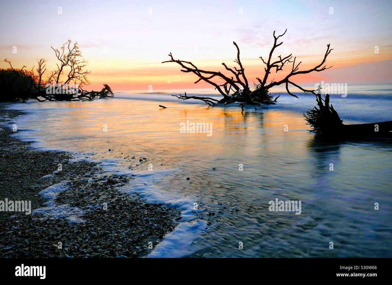Amanecer en el Boneyard beach en Carolina del Sur Foto de stock