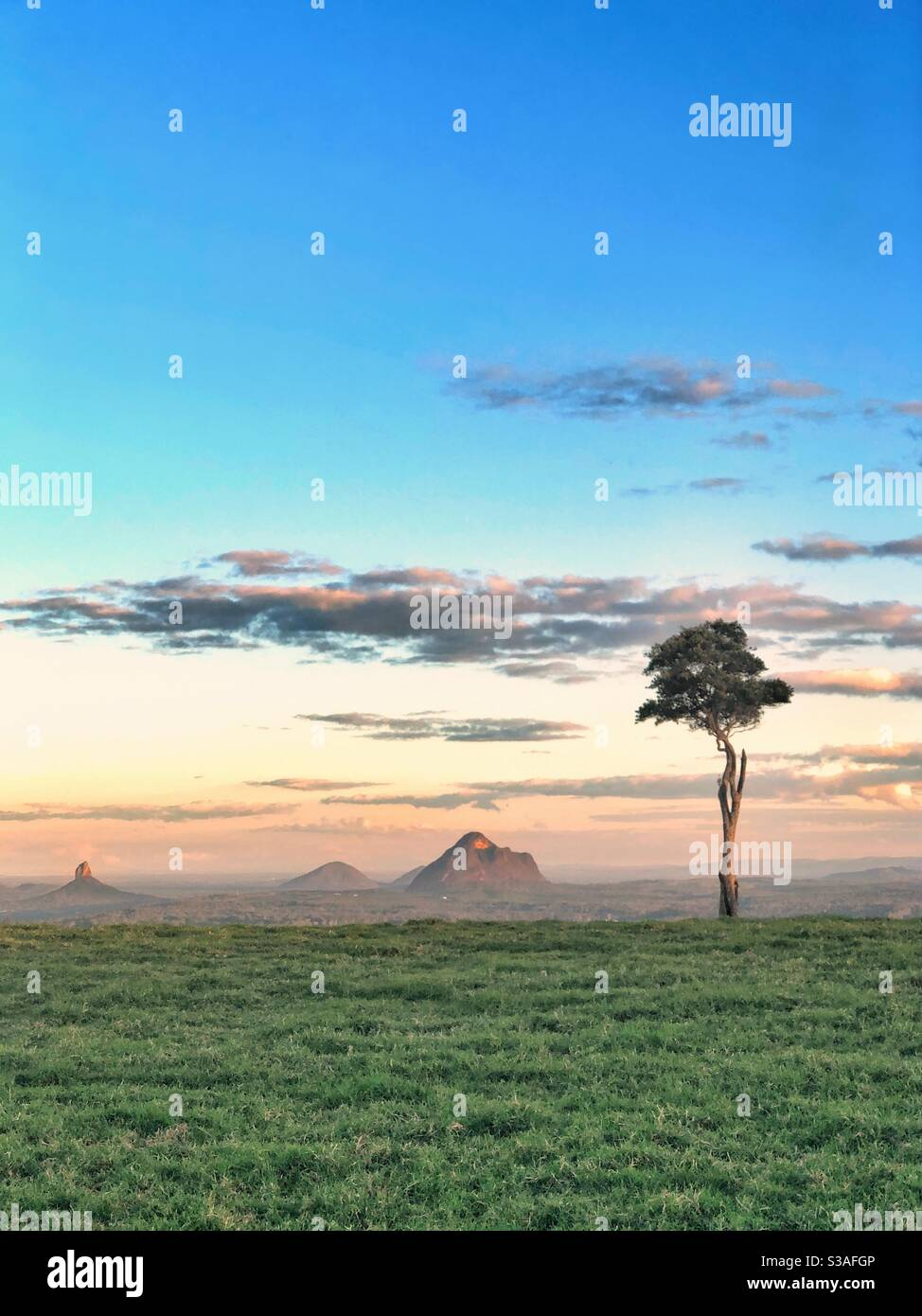 One Tree Hill Maleny Glasshouse Mountains Queensland Lone Tree Foto de stock