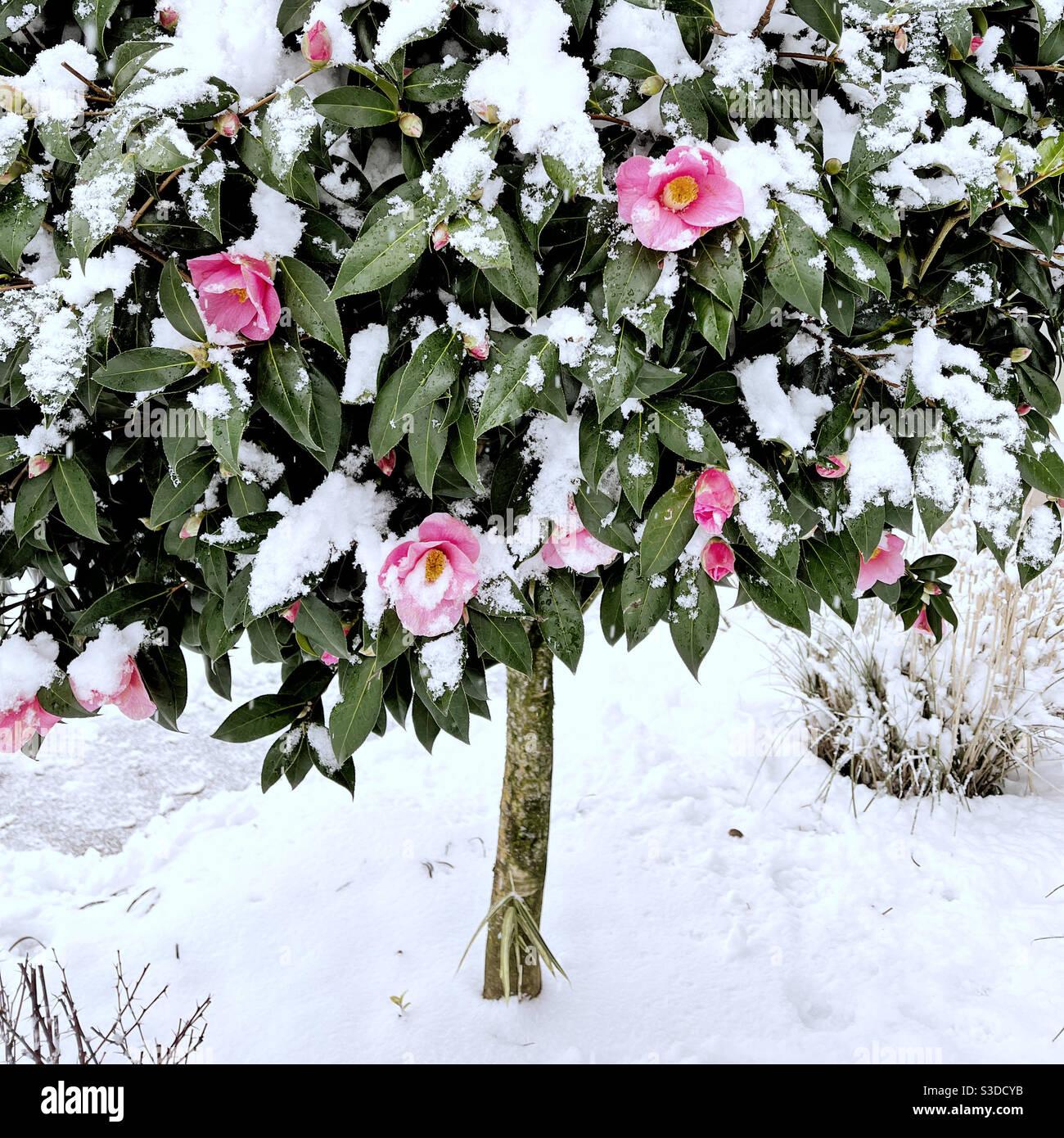 Demasiado pronto para florecer Foto de stock