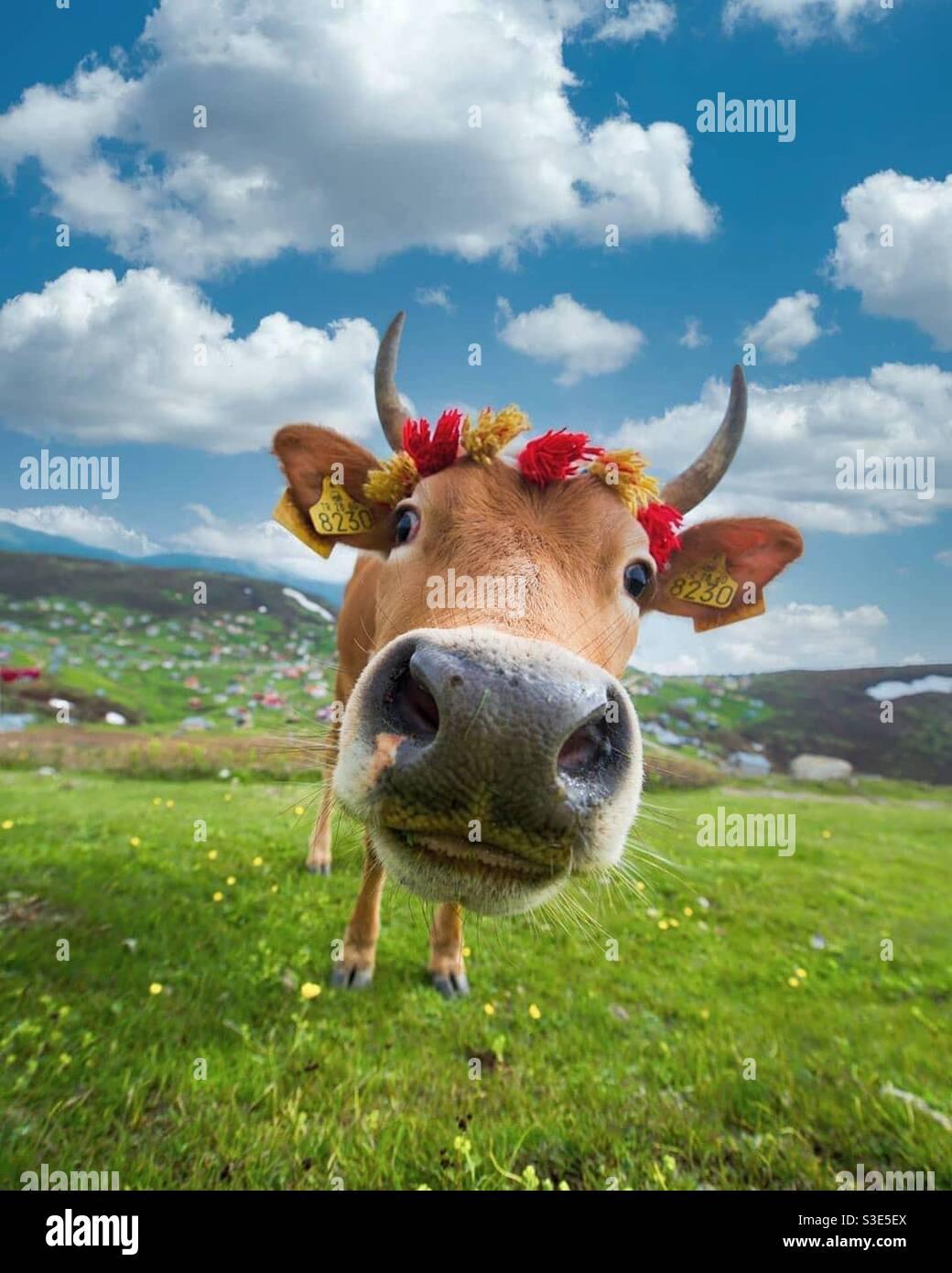 Cara de guacamaya y corona lindas Foto de stock