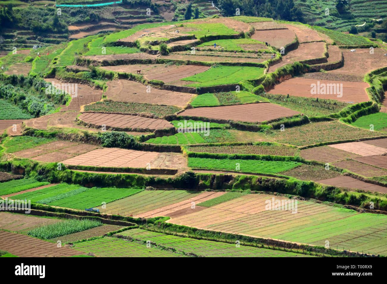 Poombarai Village Y El Cultivo De Terrazas En Kodaikanal