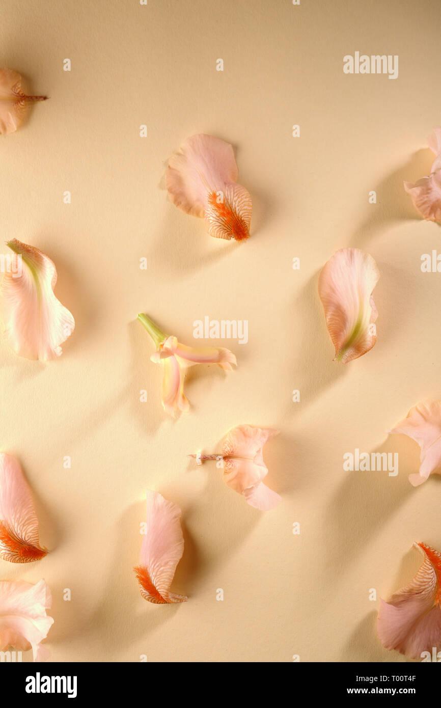 Fondo floral de pétalos de iris Foto de stock