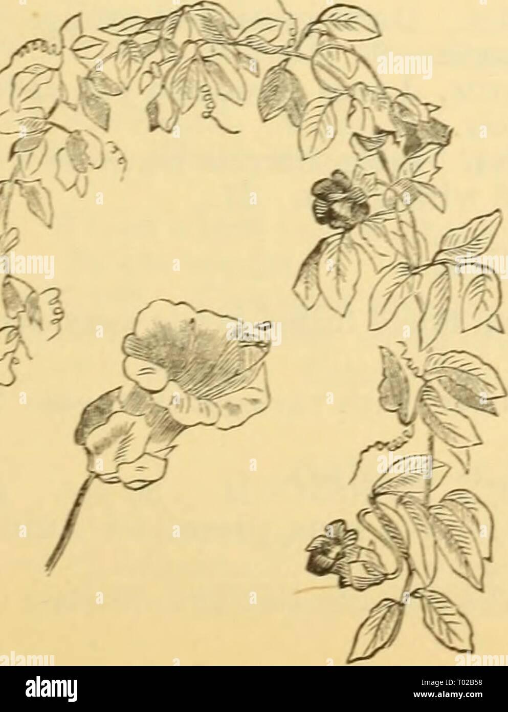 Dreers Garden Calendario 1879 Dreersgardencale1879henr Año