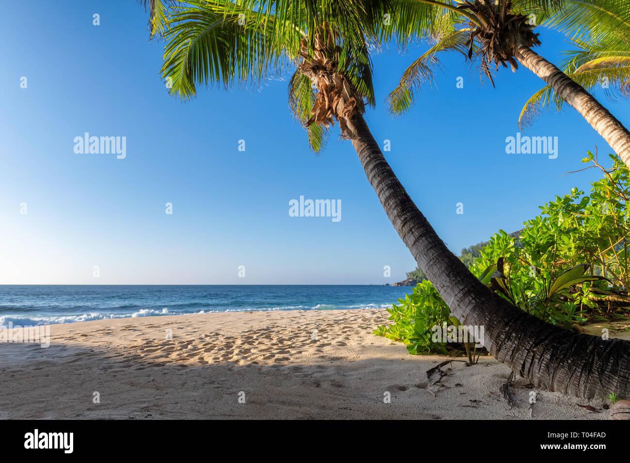 Playa exótica al atardecer con palmas de coco en una isla tropical Foto de stock