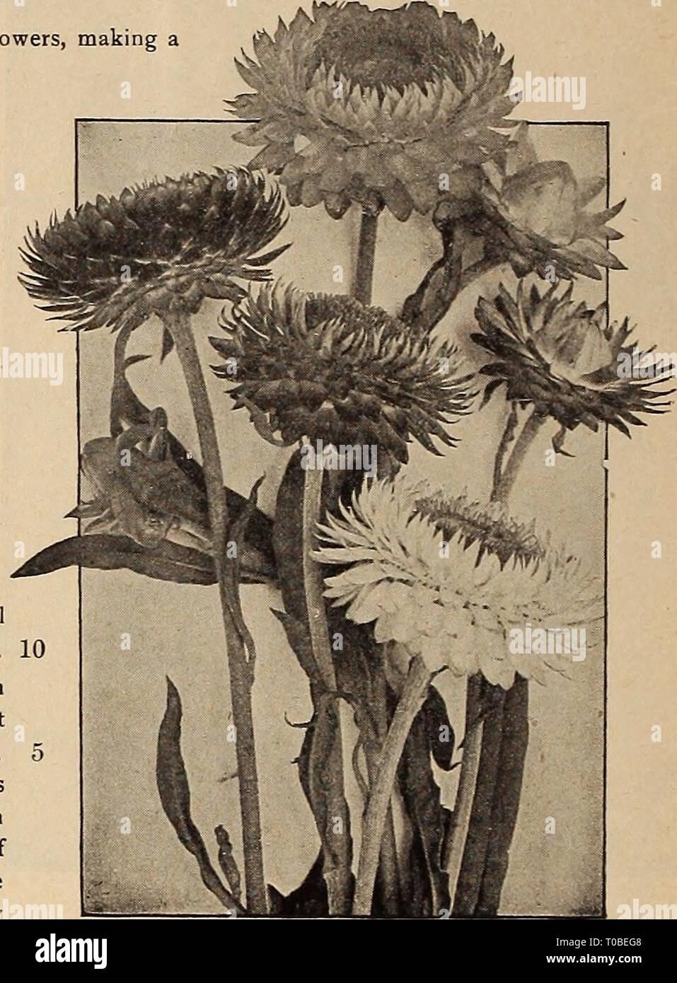 Girasol Otoño Belleza Para Ca 10 15 Plantas Semillas