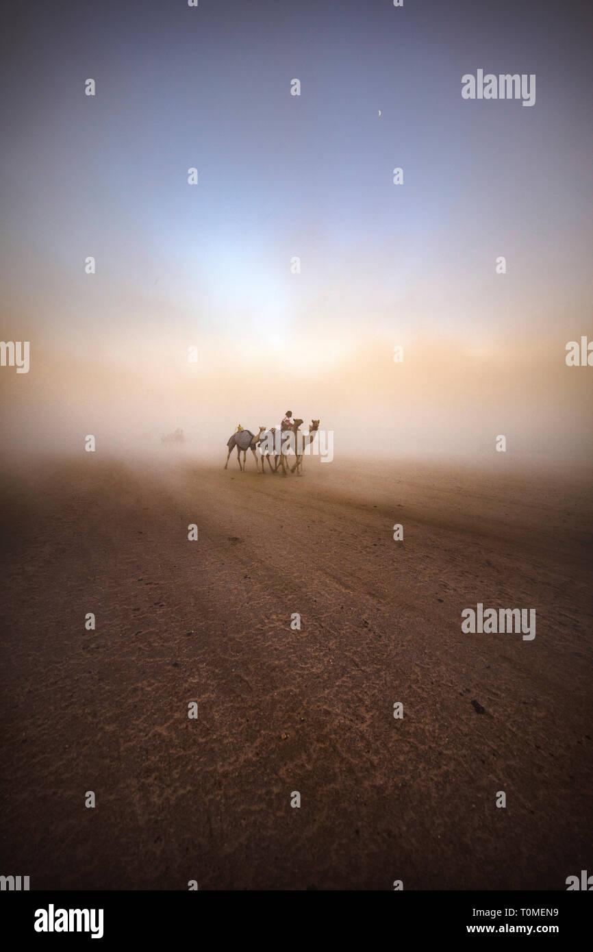 Carrera de camellos en Arabia Saudita Foto de stock