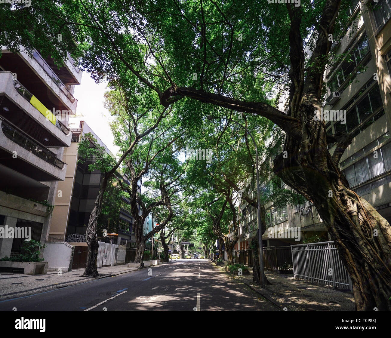 Vista de la avenida arbolada en Ipanema, Rio de Janeiro, Brasil. Imagen De Stock