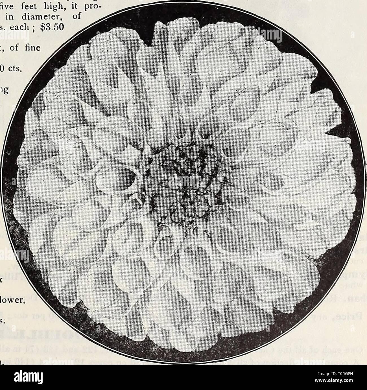 2b3edd207129 Dreer 1907 jardín del libro (1907) Libro de Dreer 1907 jardín  jardín1907dreers1907henr Año