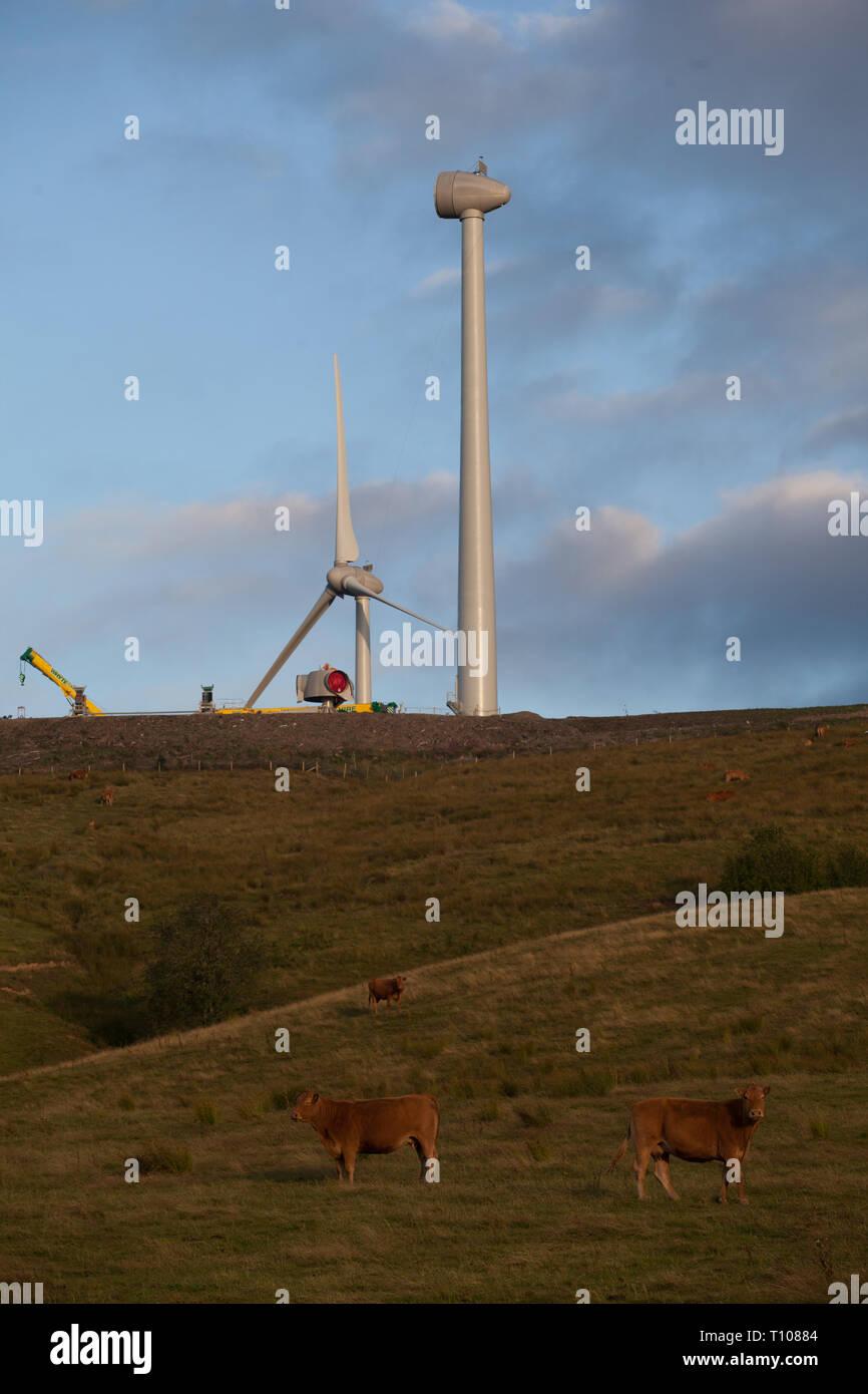 Energía eólica en construcción antigua forestal en Gales montaña debido al aumento en el gobierno el porcentaje de generación de energía renovable. Foto de stock