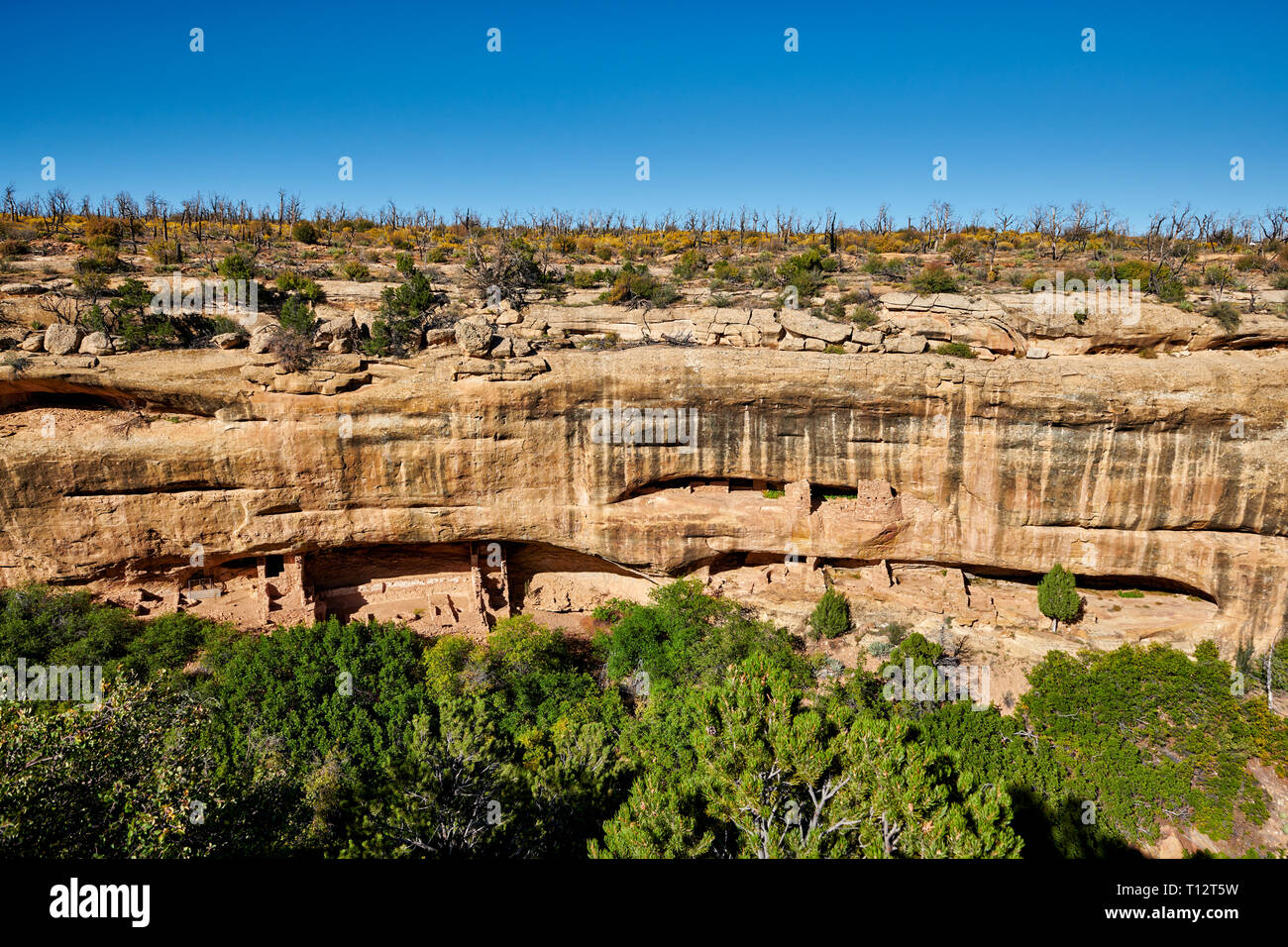 Cliff viviendas en Mesa-Verde-National Park, sitio del patrimonio mundial de la UNESCO, Colorado, Estados Unidos, América del Norte Imagen De Stock