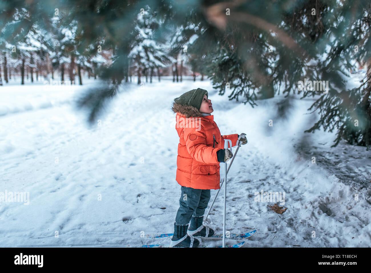 Un pequeño niño de 3-6 años, en el invierno en el parque de la ciudad, mira los árboles en esquís para niños. Espacio libre para el texto. Los primeros pasos de los niños Foto de stock