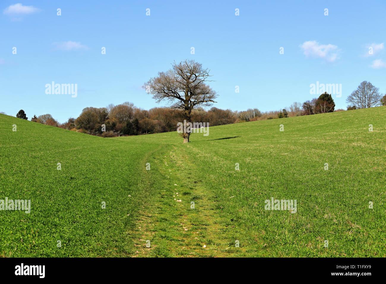 Un paisaje rural inglés con la vía a través de un campo de cultivo en las colinas de Chiltern con solitario árbol Foto de stock