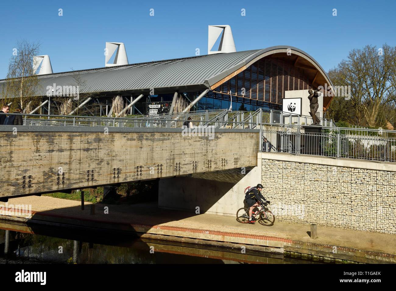 Un ciclista pasa la WWF Living Planet Center en el centro de la ciudad de Woking (Surrey, Reino Unido Foto de stock