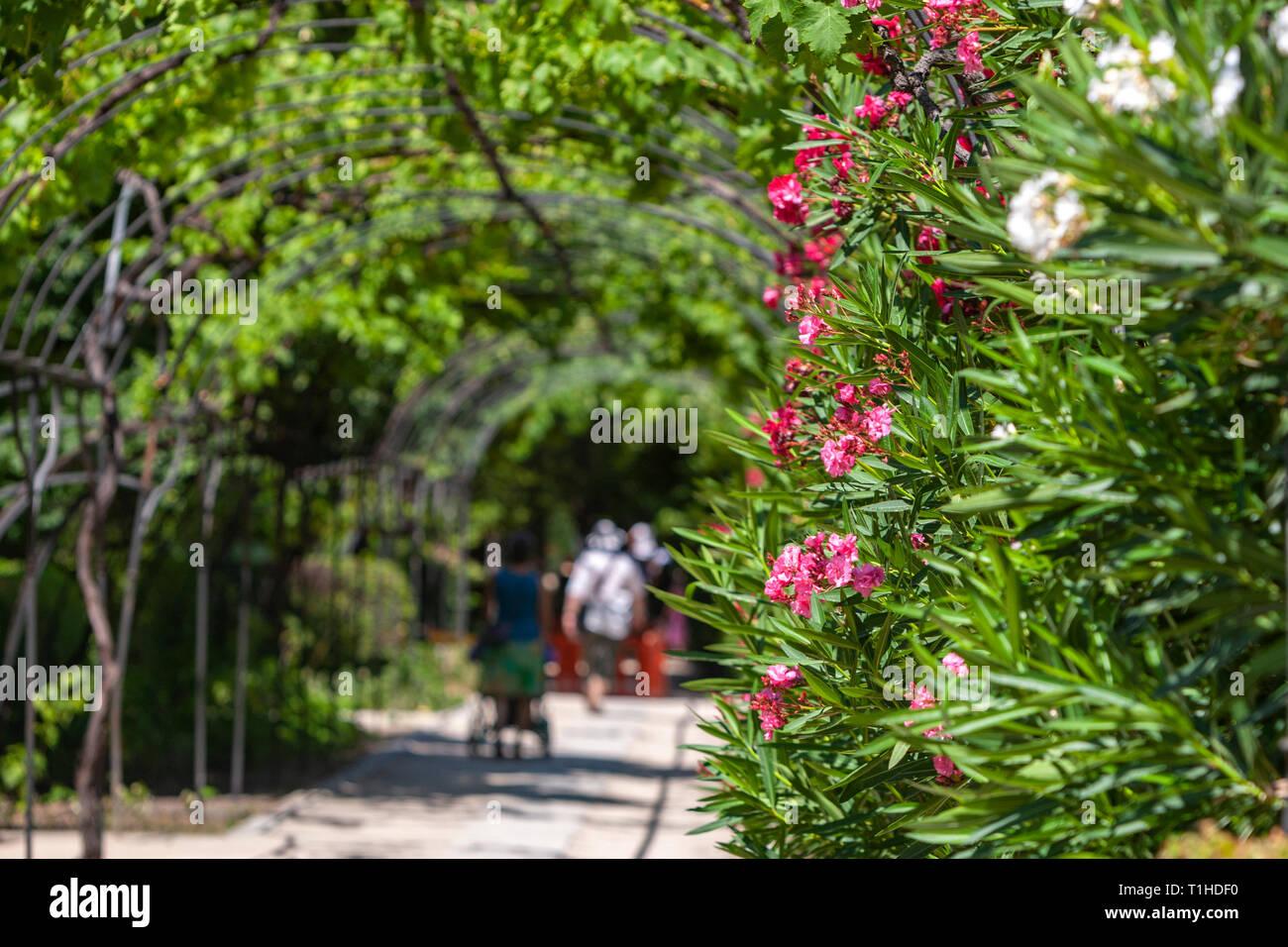 Paseo José Celestino Mutis, Real Jardín Botánico, el Real Jardín ...