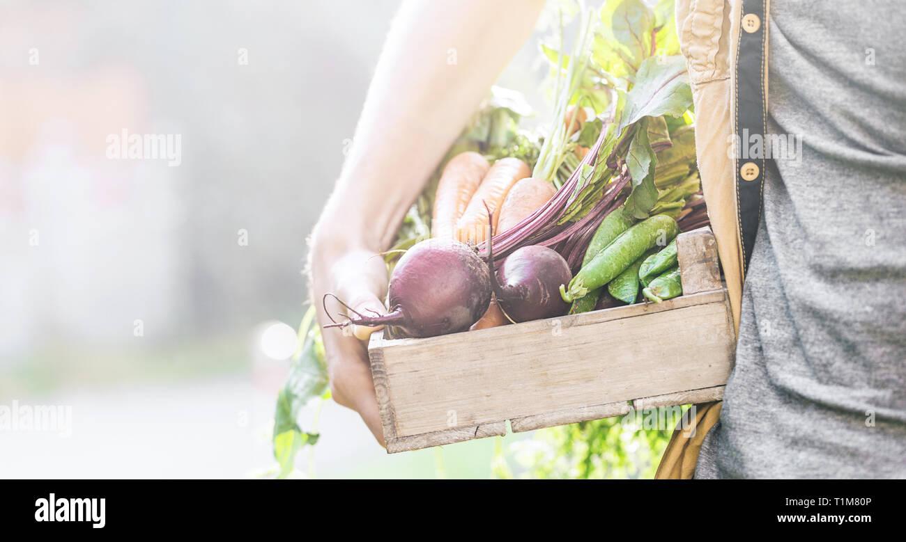 Primer plano del hombre agricultor mantiene frescas hortalizas maduras en caja de madera en el jardín de verano otoño Vida Sana cosecha de primavera concepto horizontal espacio de copia Foto de stock
