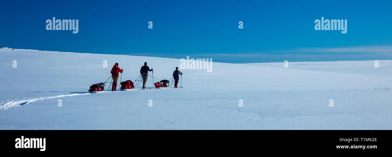 Grupo de esquí cross country atravesando la meseta de Finnmarksvidda. Finnmark, Noruega del ártico. Foto de stock