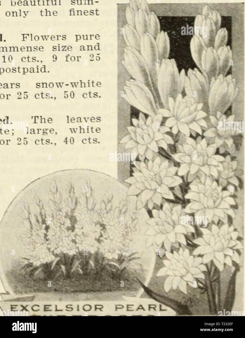 Natural floristerías Rafia 150 g de 1m de longitudes Blanco