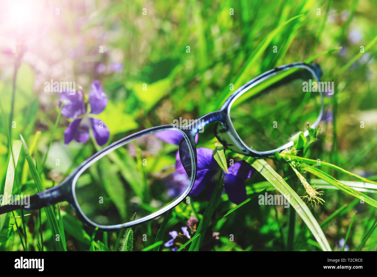 da07fd0ca1 Optometría gafas de fantasía en el pasto verde y flores violetas. Imagen  conceptual de visión