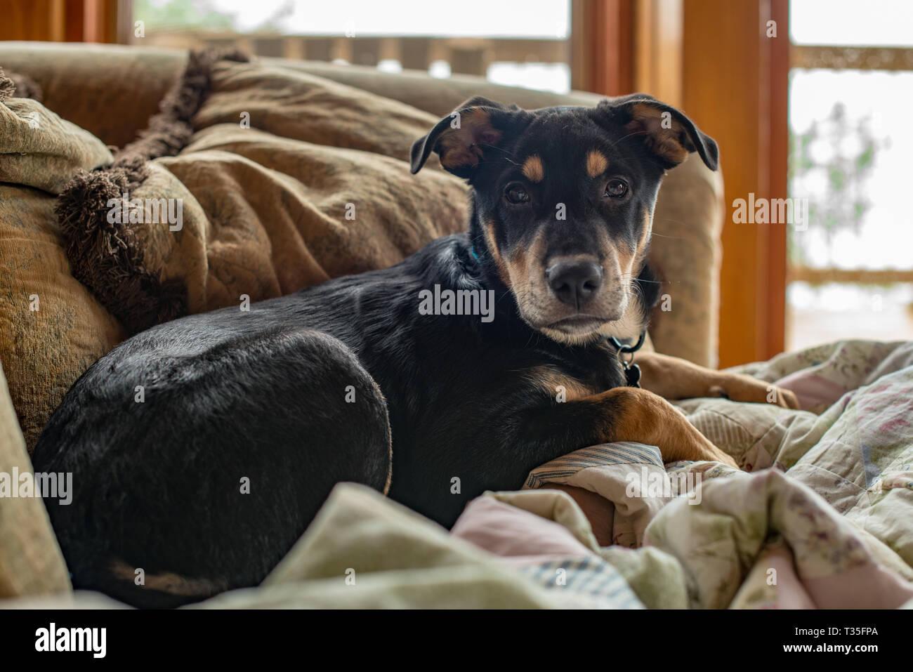 Este cachorro huérfano fue adoptado recientemente de una organización de rescate, pero ahora está feliz de participar en su familia de vacaciones en una cabaña de montaña. Foto de stock