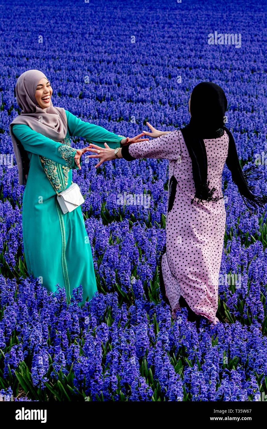 LISSE - bruidspaar trouwen tulpenvelden Staan Een de tulp bloei tulpen , Roos , Rozen , bollenvelden staan de bloei tijdens de lente bloembollen Imagen De Stock