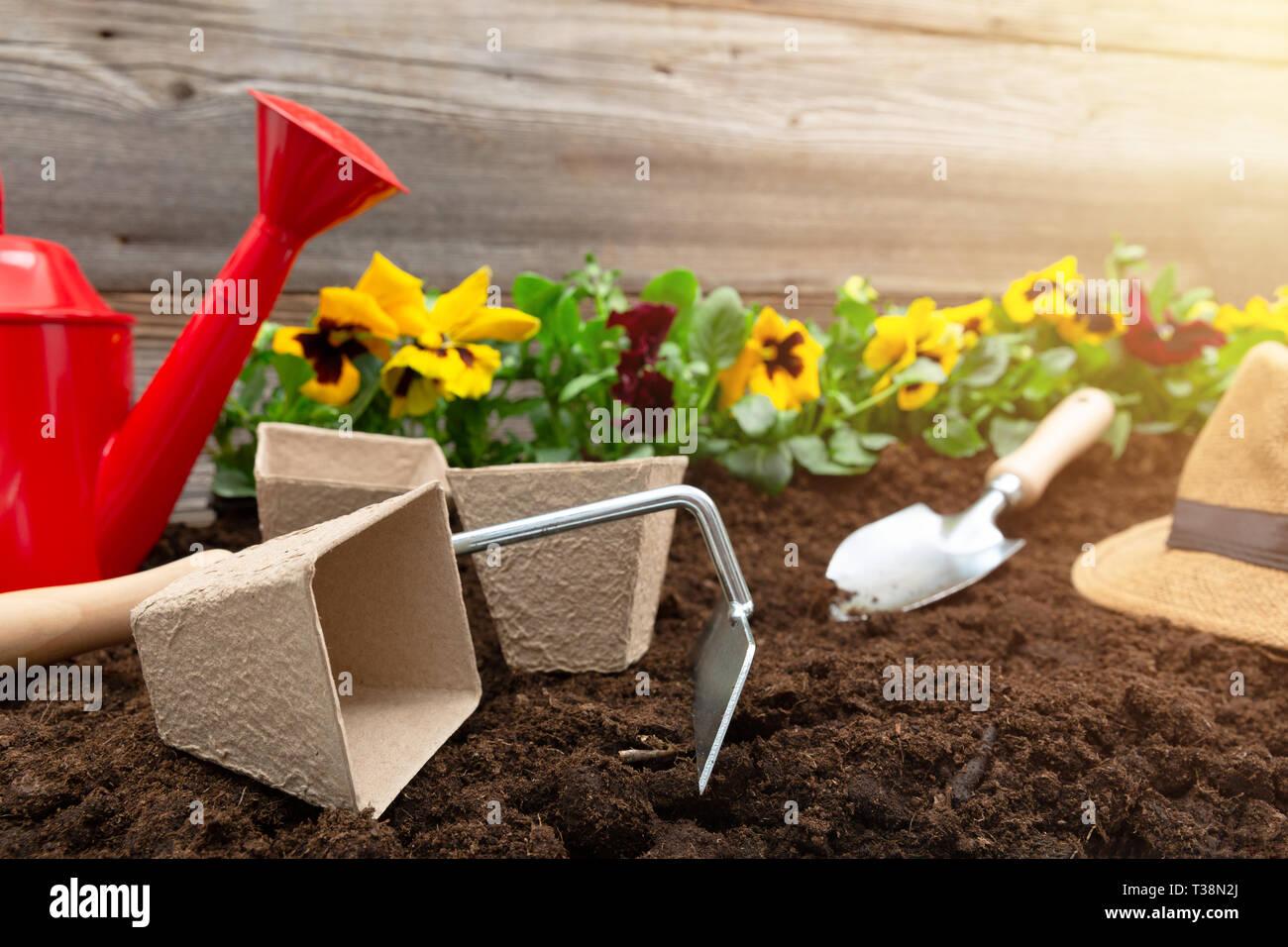 Herramientas De Jardinería Y Spring Pansy Flores En La