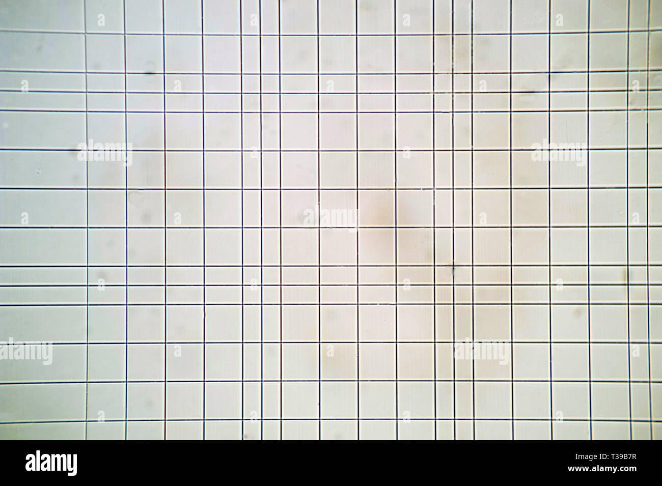 Vista microscópica del escrutinio Thoma cámara Foto de stock