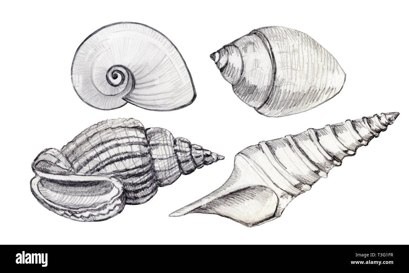 Conjunto de concha. Ilustración dibujados a mano. Lгўpiz simple. Imagen De Stock