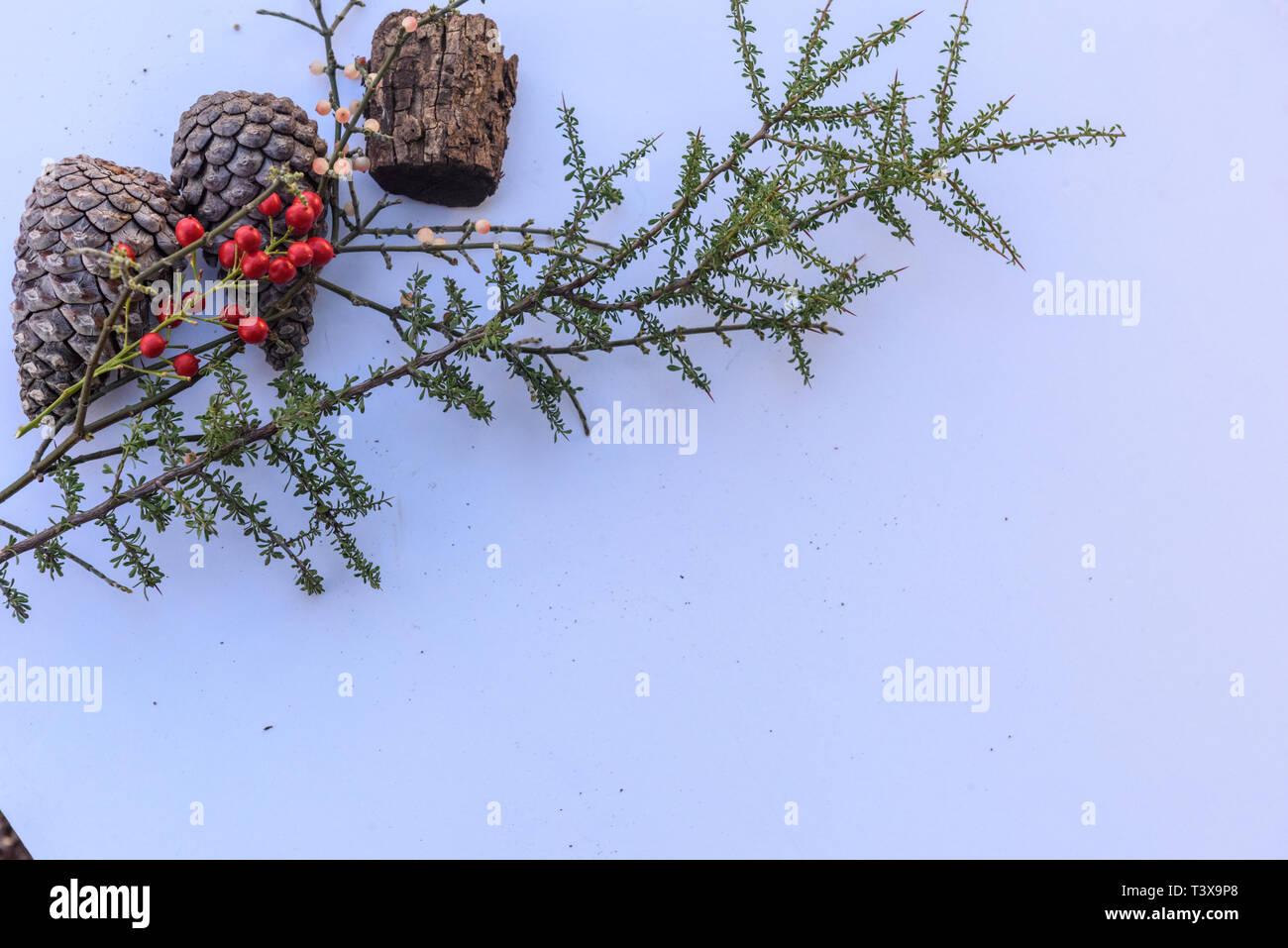 Still life botánico de hojas, conos de pinos, plantas y bayas en tonos marrón con fondo blanco. Foto de stock