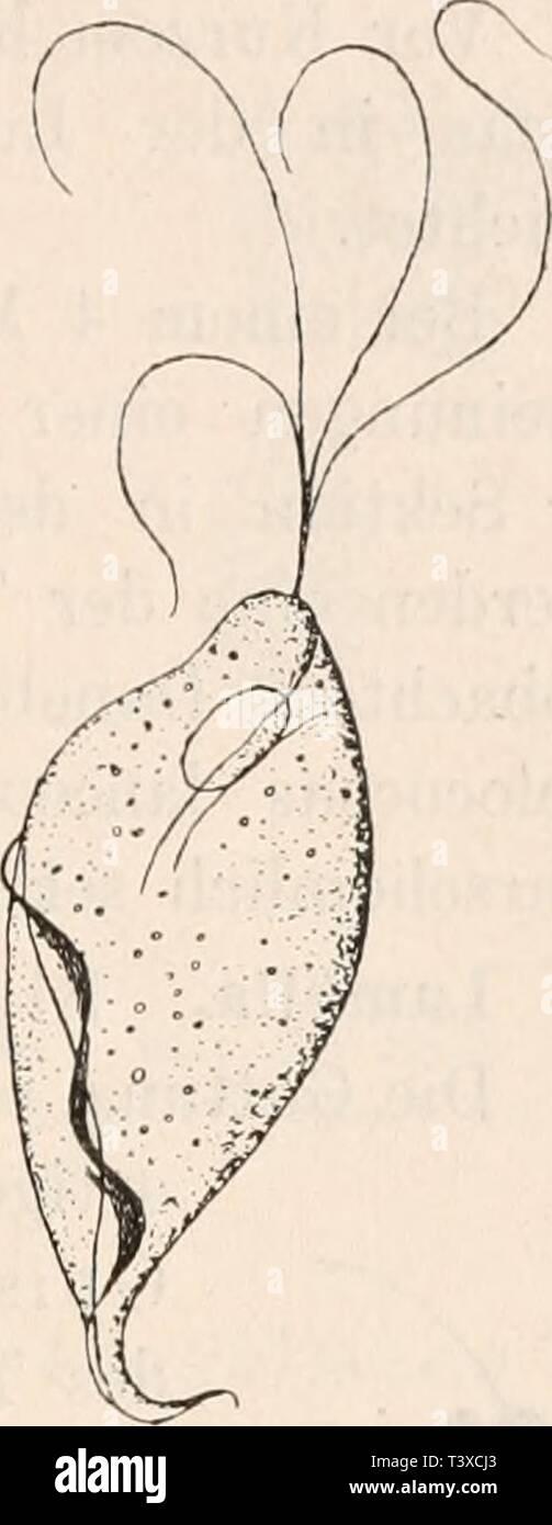 Imagen de archivo de la página 166 de Die Protozoen als Krankheitserreger des Foto de stock