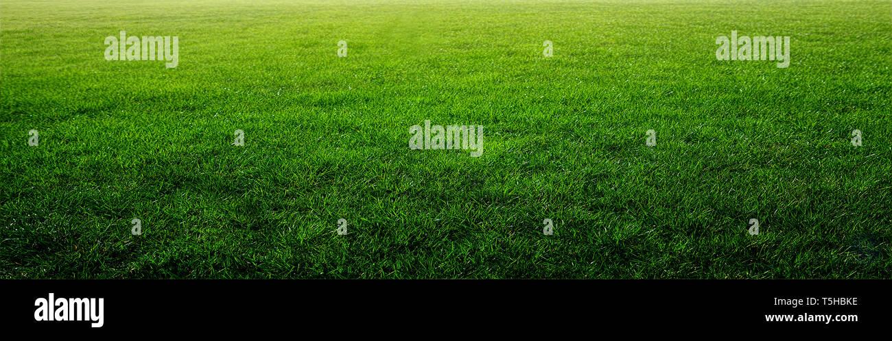 Luminoso atardecer en campo verde. Imagen De Stock