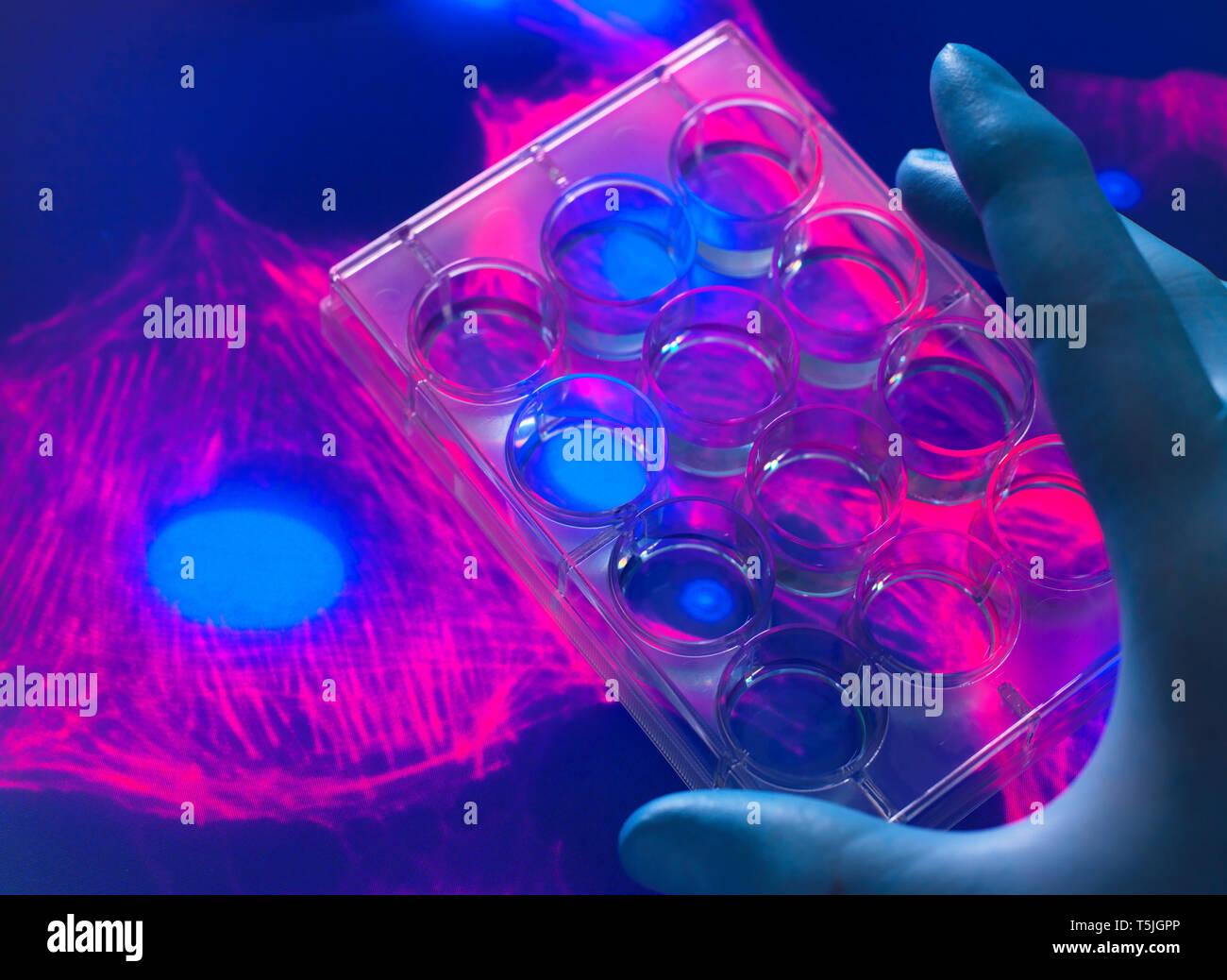 Ver El Biólogo Celular De Células Madre Cultivadas En Un