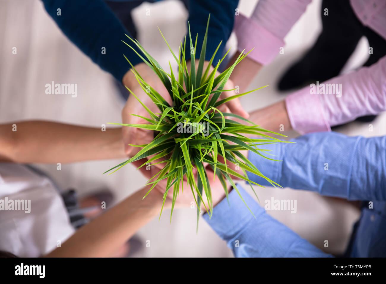 El grupo de empresarios manos sosteniendo Verde Maceta Foto de stock