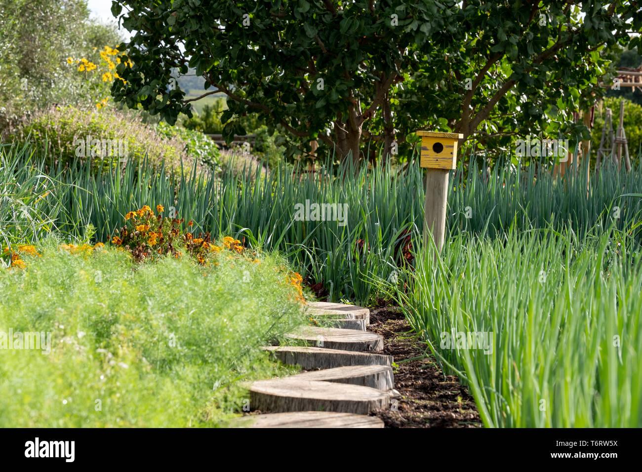Tranquilo, bien abastecido, jardín, con una gran variedad de plantas y un pájaro amarillo de la casa al final de la ruta. Foto de stock