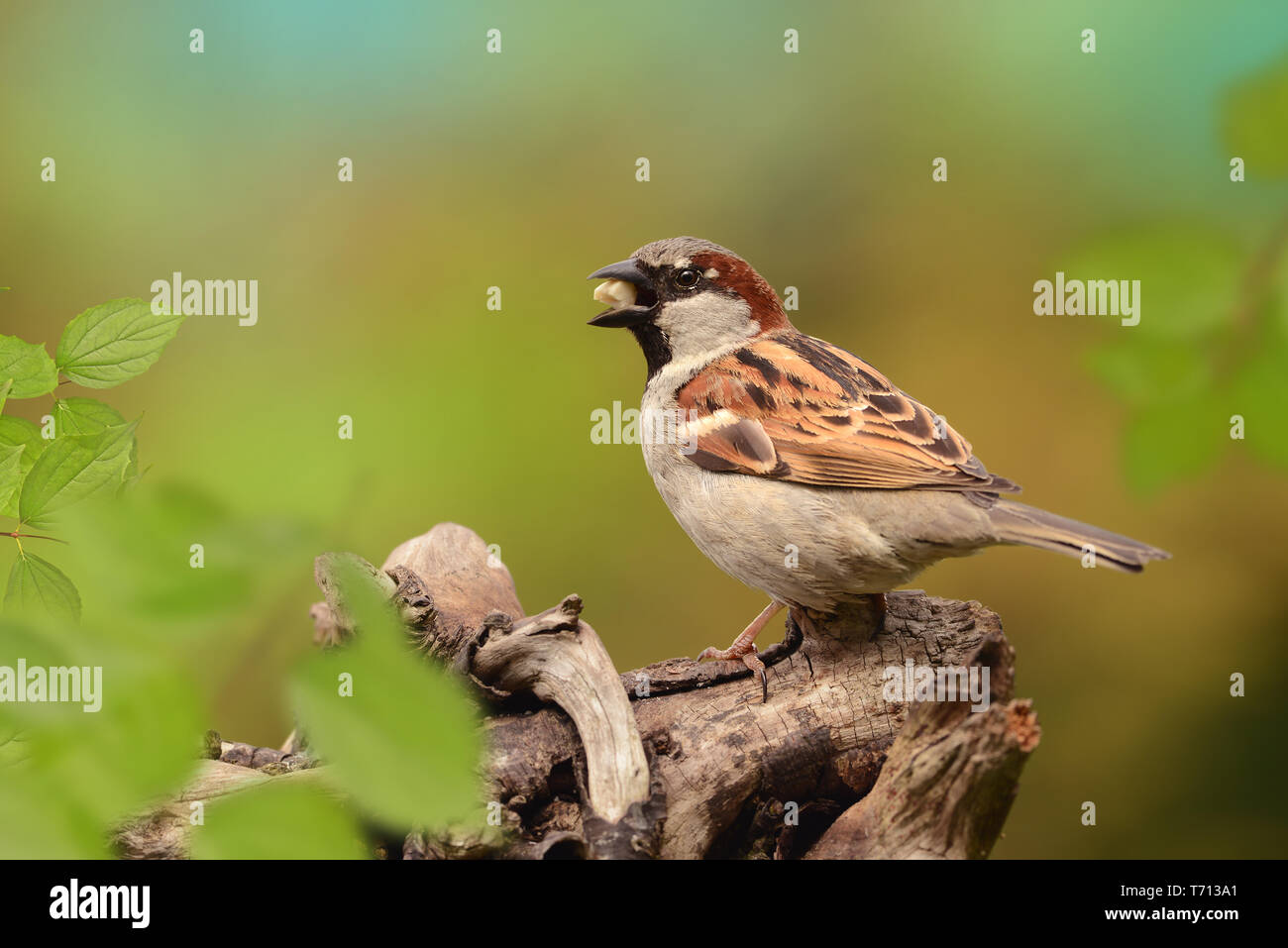 Las aves 79 Foto de stock