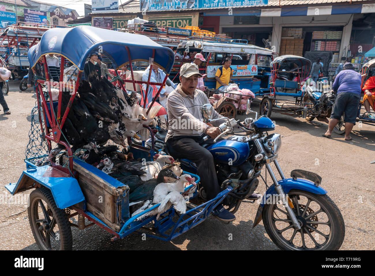 Mercado local grande en Pakse, el hombre en bicicleta con living pultry, Laos, Asia Foto de stock