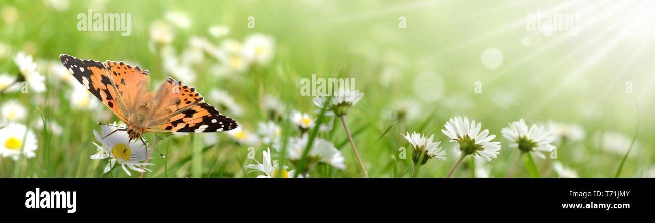 Butterfly 429 Foto de stock