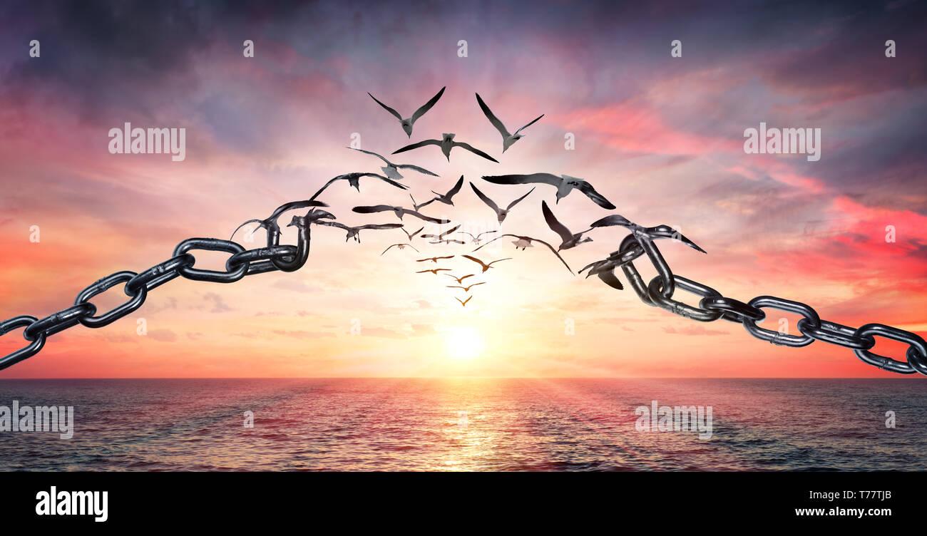 En las alas de la libertad - aves volando y Cadenas rotas - Concepto de carga Foto de stock